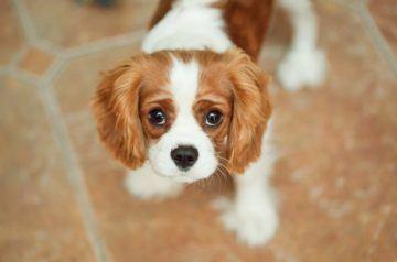недорогие породы собак