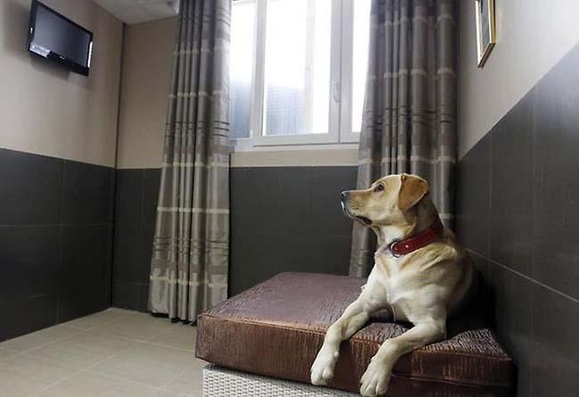 Отель для животных