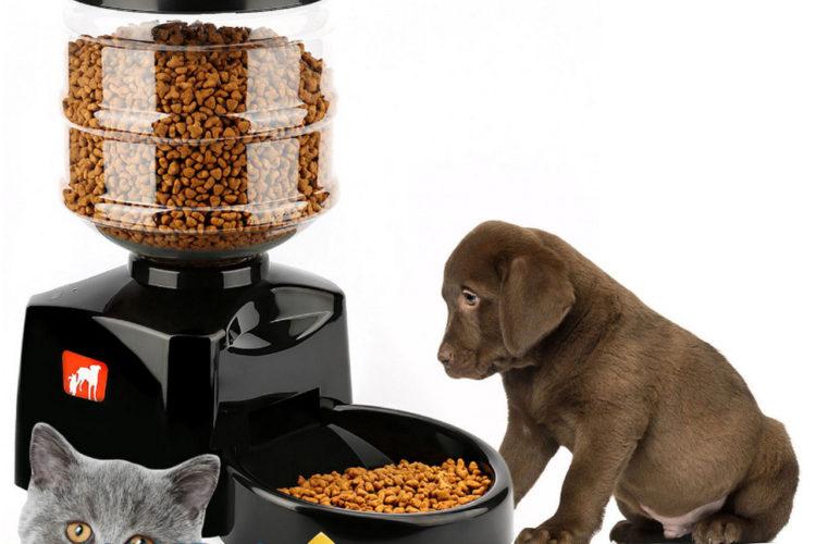 В чем особенности автоматических кормушек для собак