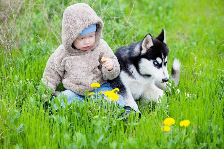 фото с щенками хаски и малышом годовалым радоваться должны