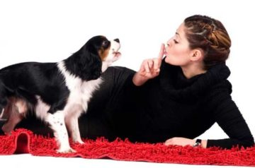 как отучить собаку лаять
